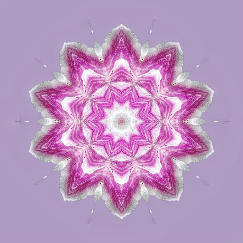Purple flowers in mandala stock illustration