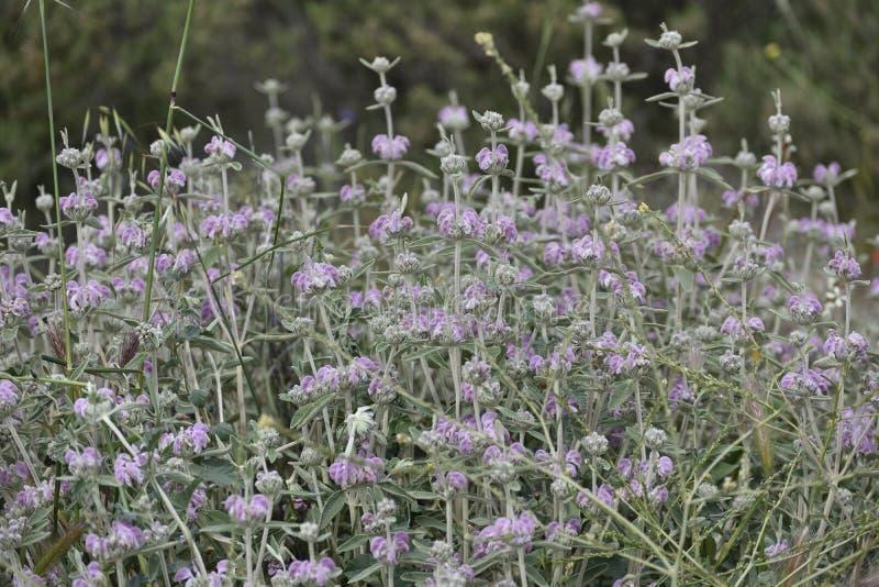 Purple flowers mat with light green velvet stalks stock image