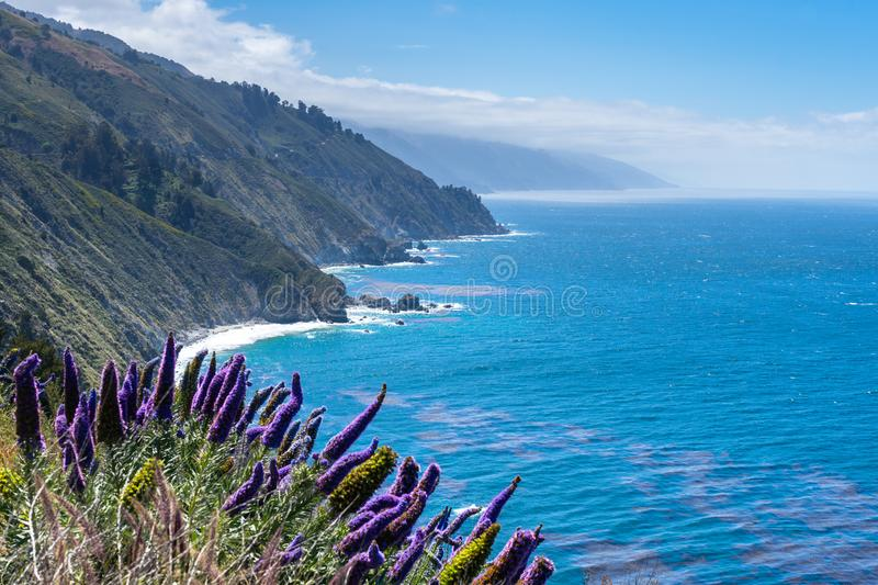 Purple Flowers by Ocean. Purple Flowers on the coast on a sunny day stock photography