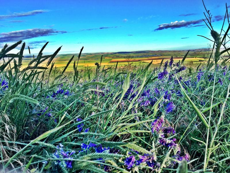 purple flowers over the horizon stock image