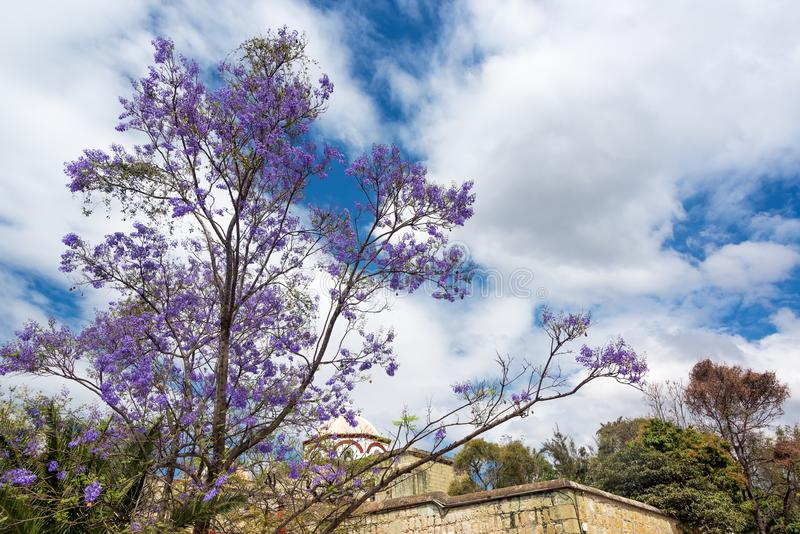 Purple Flowers and Sky. Tree with purple flowers in Oaxaca, Mexico royalty free stock photo