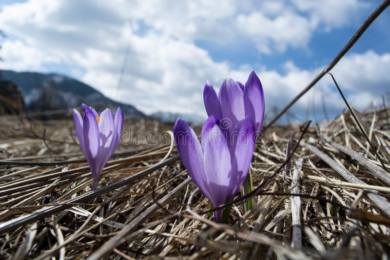 Purple flowers in the sun stock photo