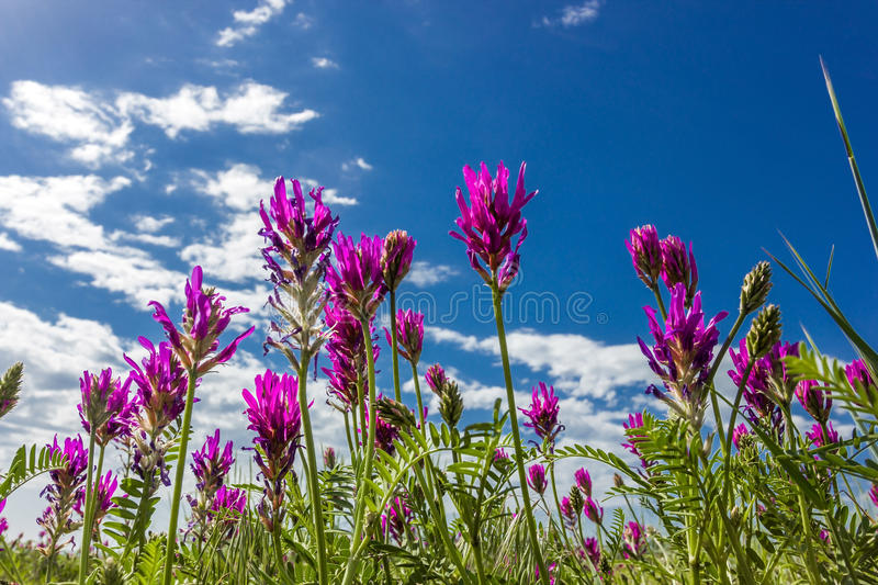 Purple flowers under a blue sky view. From below stock photos