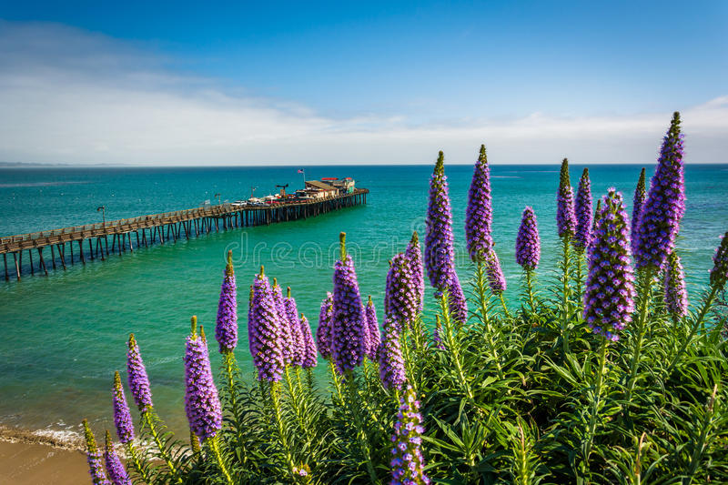 Purple flowers and view of the pier royalty free stock image