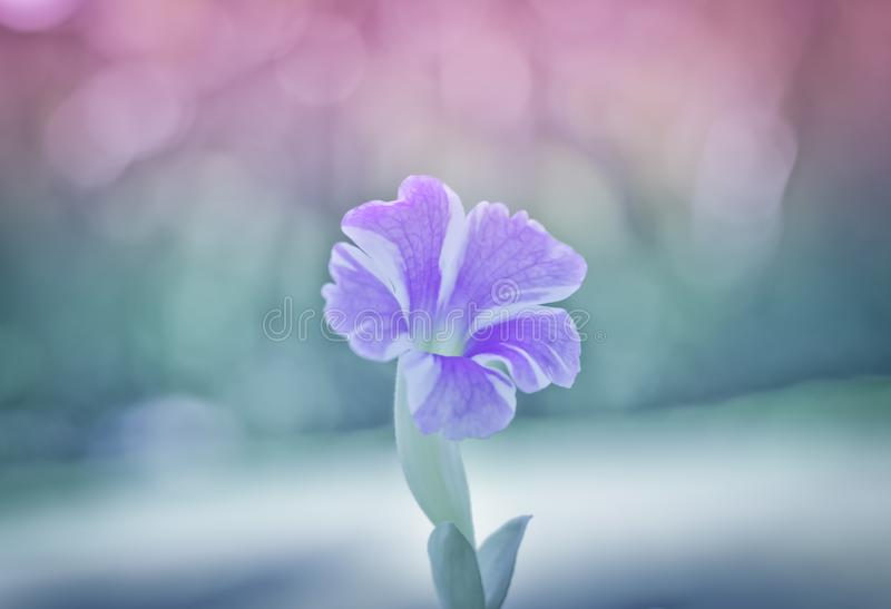 Purple flowers with warm light.  royalty free stock photos
