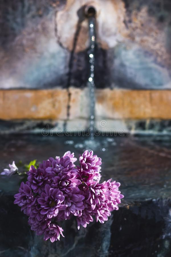 Purple flowers in water. Flowers and gardens stock photos
