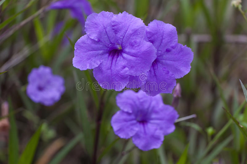 Purple flowers. In the winter stock photos
