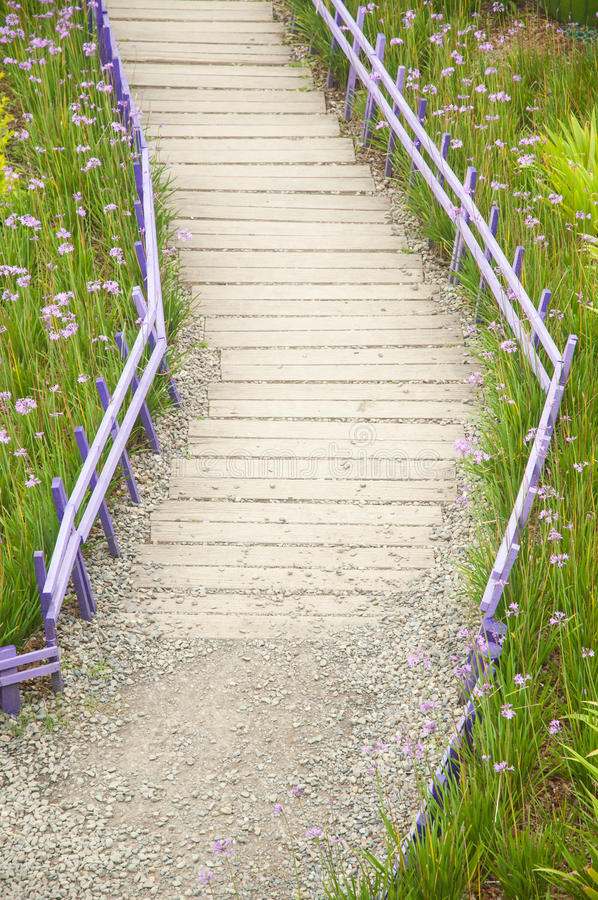 Purple Flowers with wood pathway stock image