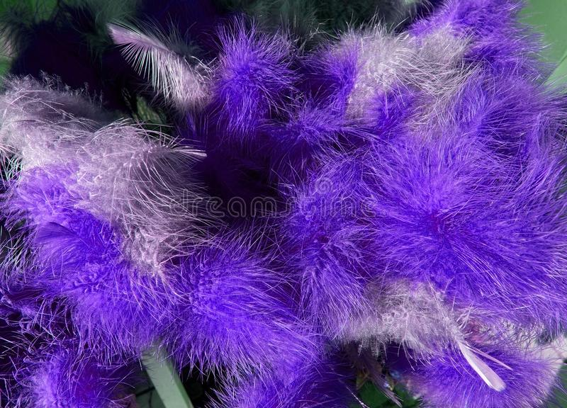 Purple fluffy easter feathers stock photography