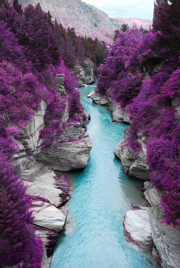 Purple forest and blue stream royalty free stock photography