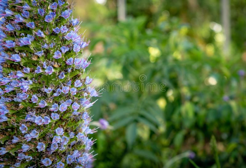 Purple fower cluster with bokeh background stock image