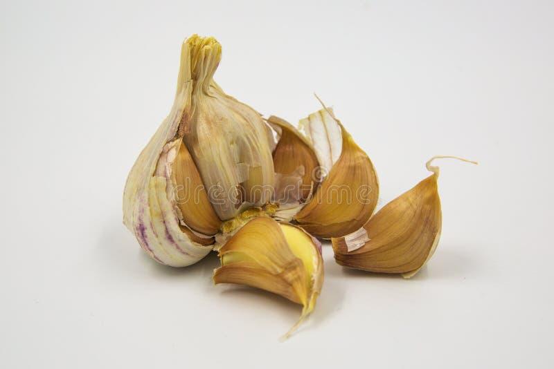 Purple Garlic Cloves stock photo