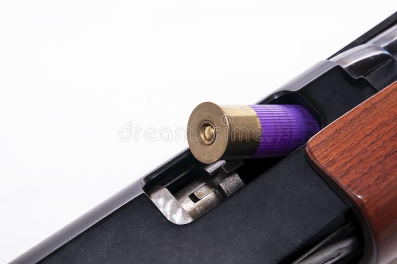 A purple 12 gauge shotgun shell shown partially in the chamber of a 12 gauge shotgun royalty free stock photo