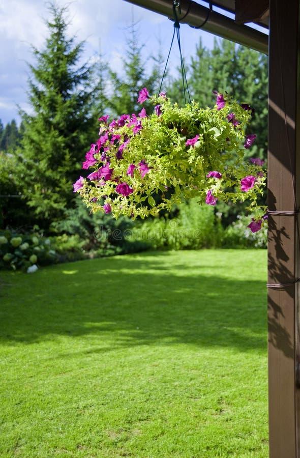 Free Purple Geranium Royalty Free Stock Photo - 10504925