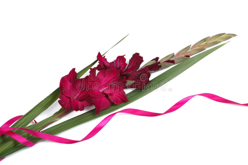 Purple gladiolus flower with ribbon isolated on white