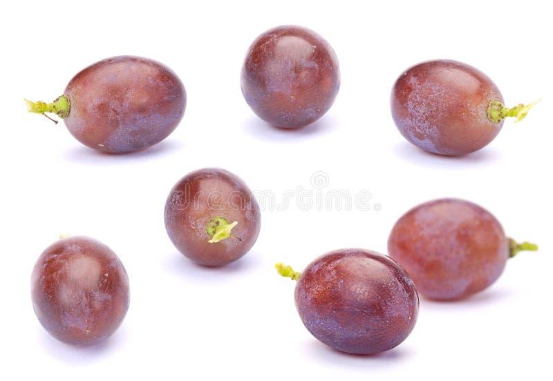 Download Purple grape stock image. Image of closeup, fruit, image - 20649389