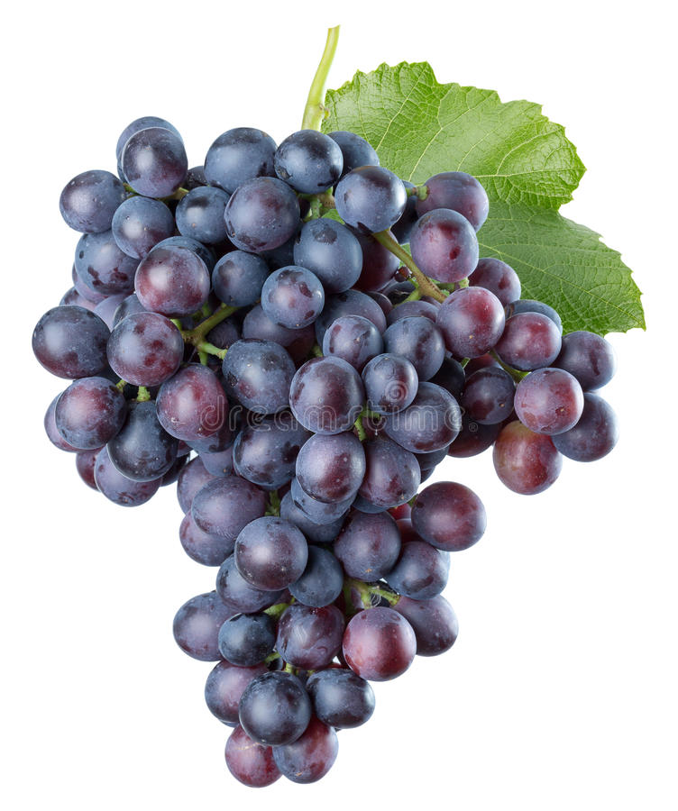 Purple grapes isolated on a white background stock photography
