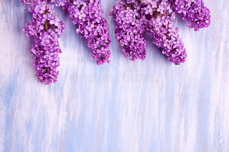 Purple grapes of lilac on a wooden bluish background royalty free stock photography