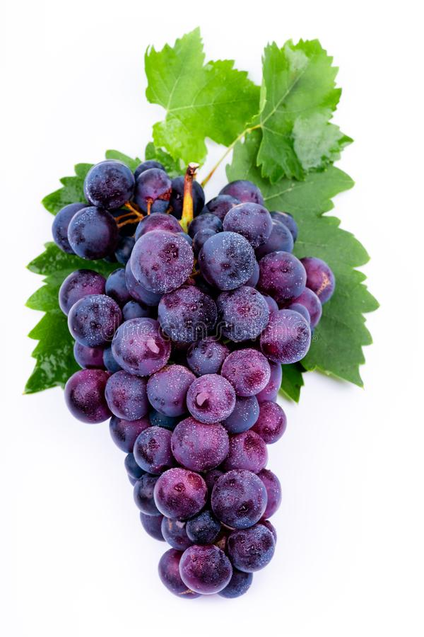 Purple grapes with water drops. On white background stock photography
