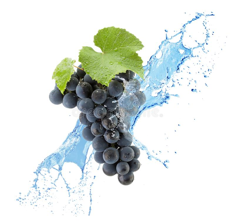 Purple grapes in water splas isolated on a white background stock image