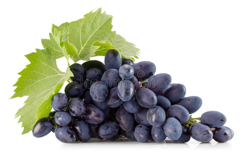 Purple grapes on a white background stock photography