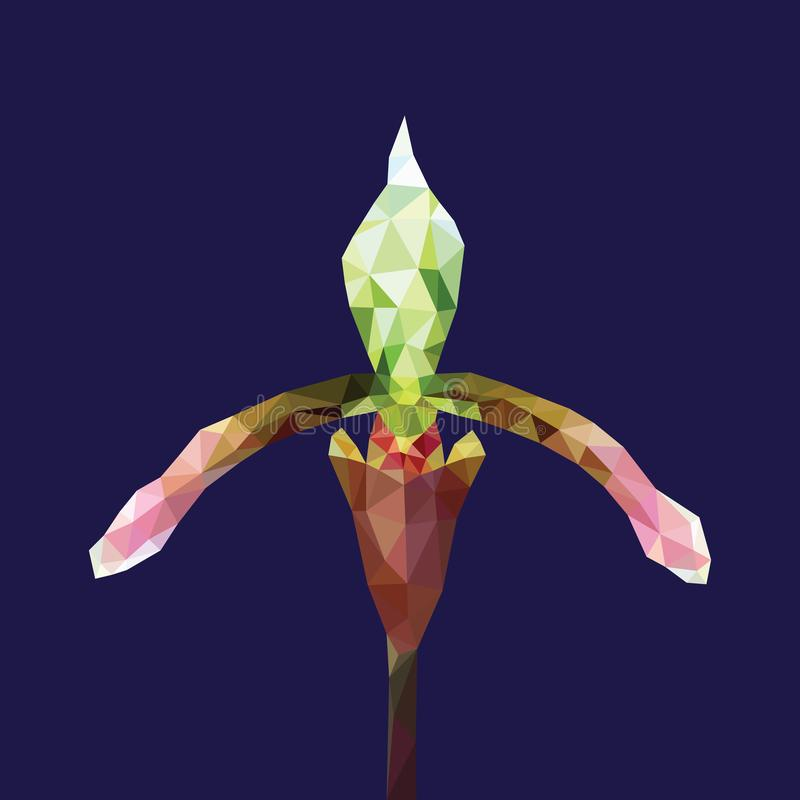 Purple green orchid low polygon isolated on blue background. Violet flower geometric icon on dark. Colorful Paphiopedilum floral royalty free illustration