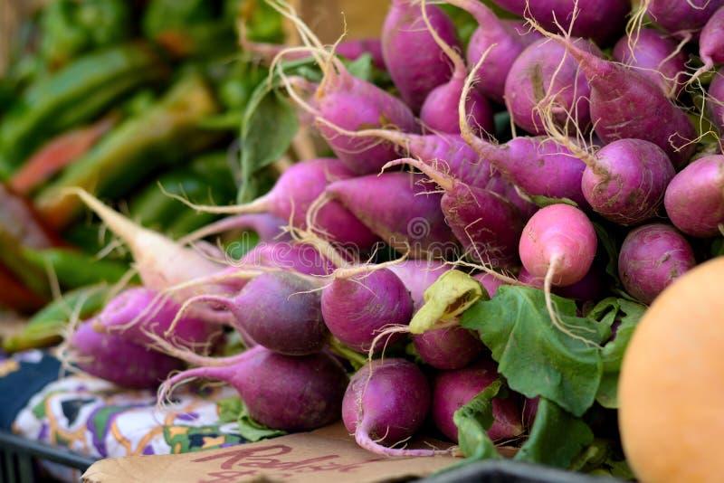Purple haze of radishes stock images