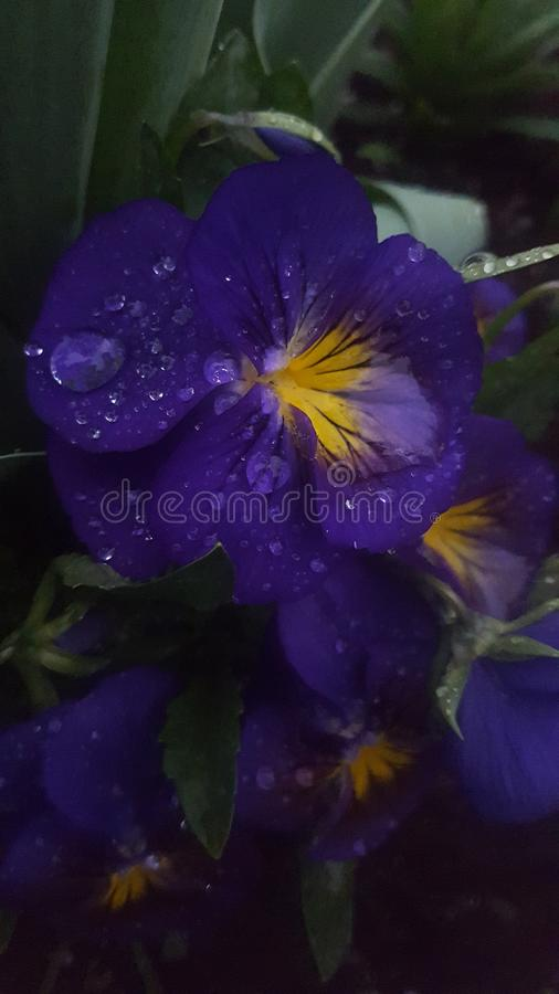 Purple heaven royalty free stock images