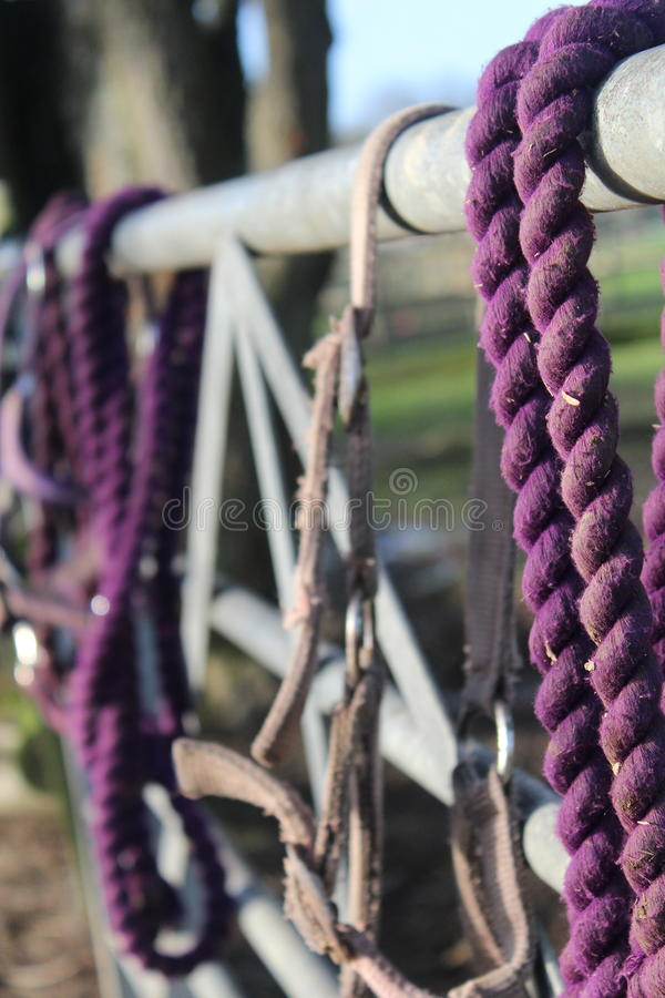 Purple horse tack on a fence stock image