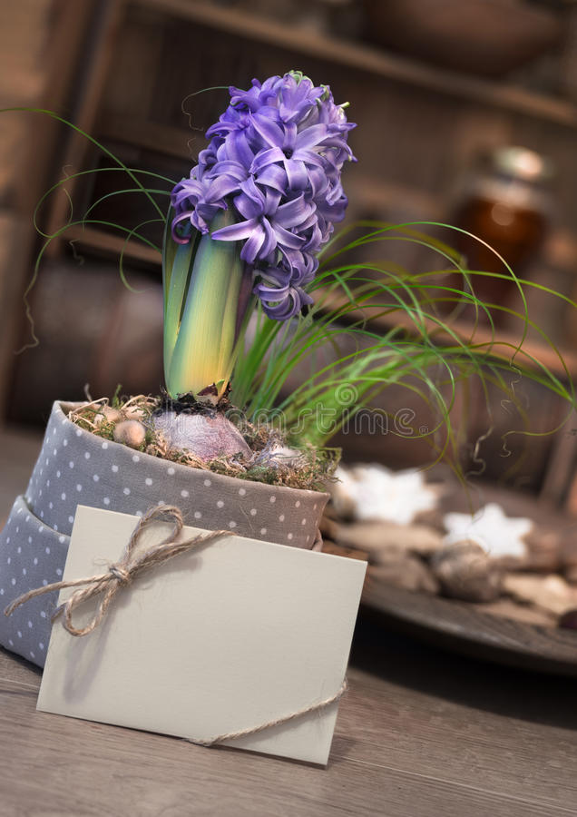 Purple hyacinth and greeting card on vintager kitchen. Purple hyacinth and greeting card on winter kitchen with plate of cookies stock photo
