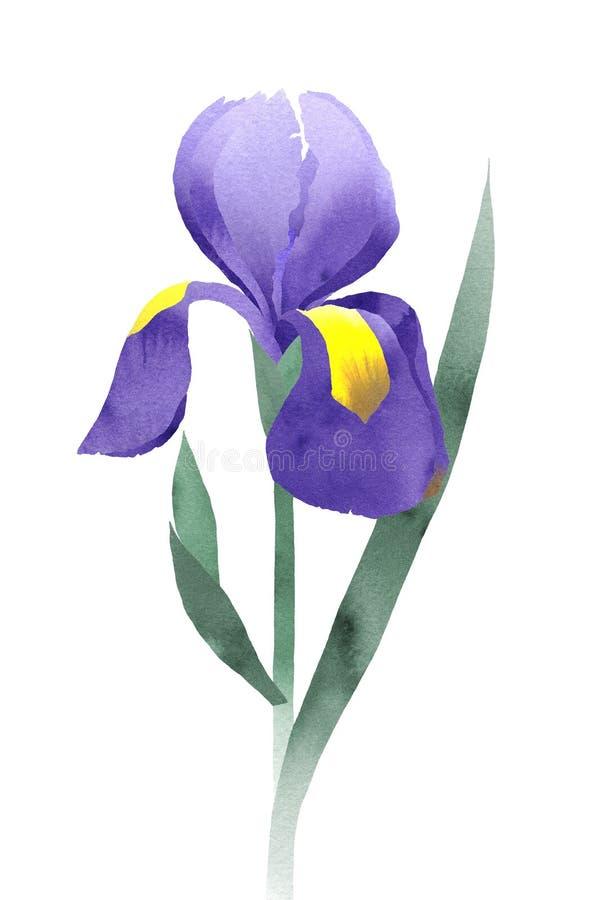 Purple iris collage stock illustration