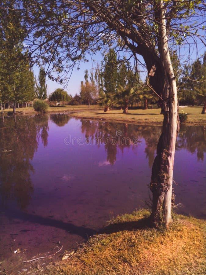 Purple lake royalty free stock photography