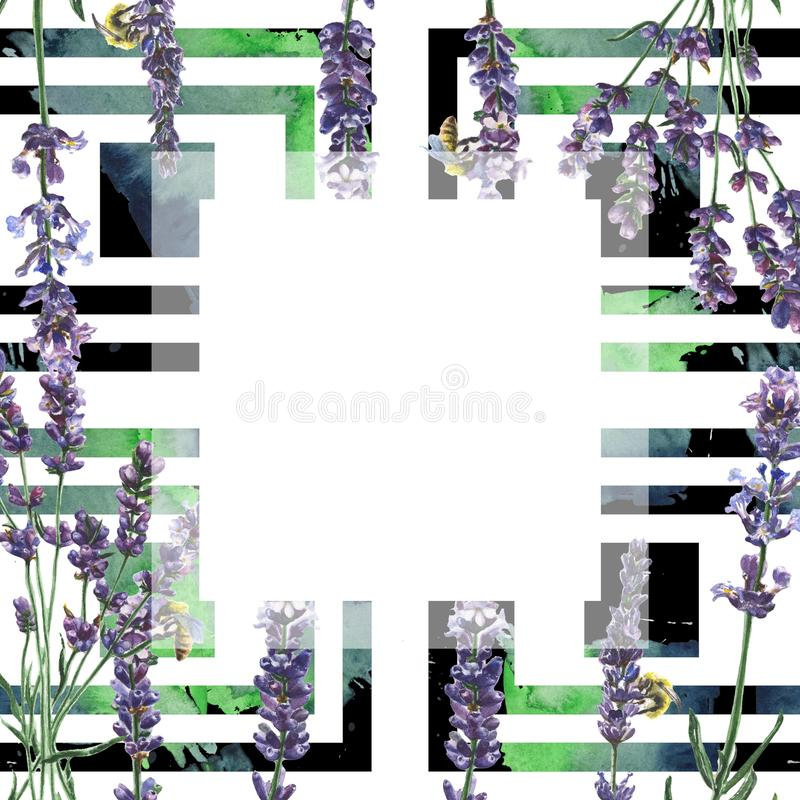 Purple lavender. Floral botanical flower. Frame border ornament square. royalty free stock photos