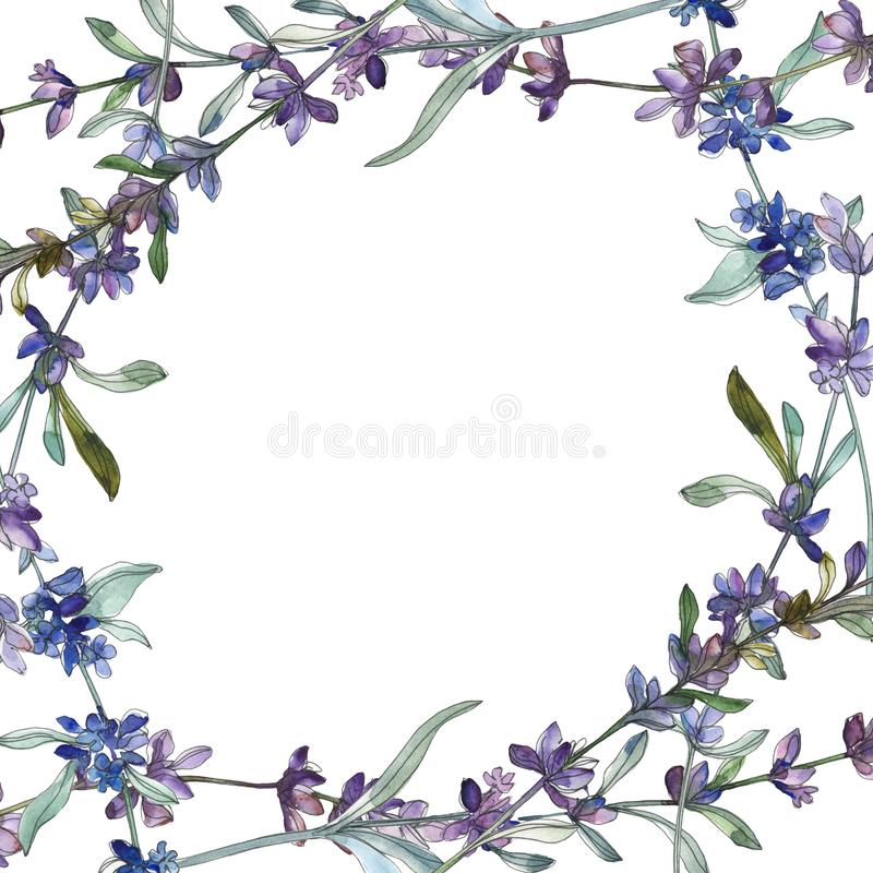 Purple lavender floral botanical flower. Watercolor background illustration set. Frame border ornament square. stock illustration