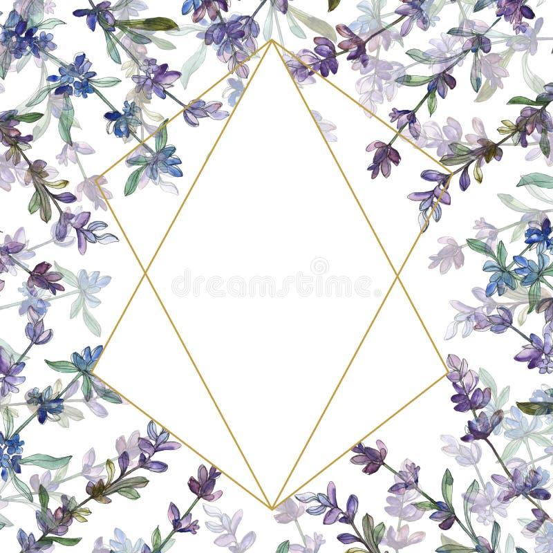 Purple lavender floral botanical flower. Watercolor background illustration set. Frame border ornament square. vector illustration