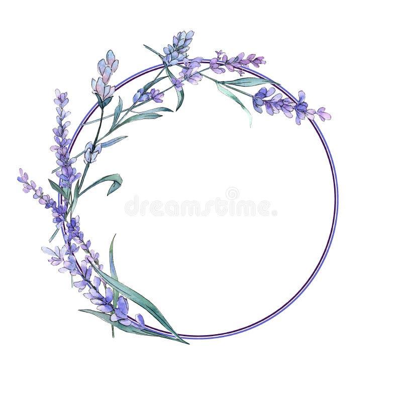 Purple lavender. Floral botanical flower. Wild spring leaf wildflower. Frame border ornament square. Purple lavender. Floral botanical flower. Wild spring leaf vector illustration
