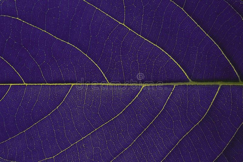 Purple leaf texture background stock photo