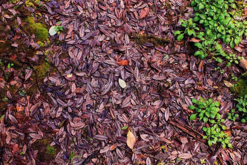 Purple leaves stock photo