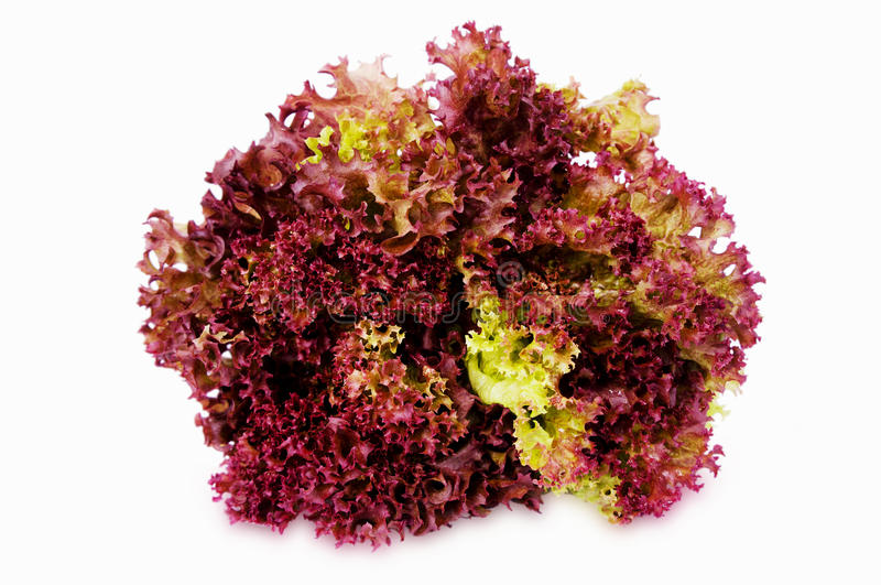Purple lettuce isolated on a white background stock photos