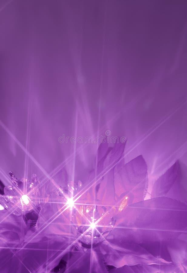 Purple lights. Abstract twinkiling poinsettia christmas lights in purple