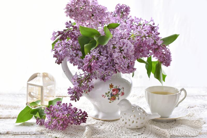 176 049 Purple Lilac Photos Free Royalty Free Stock Photos From Dreamstime