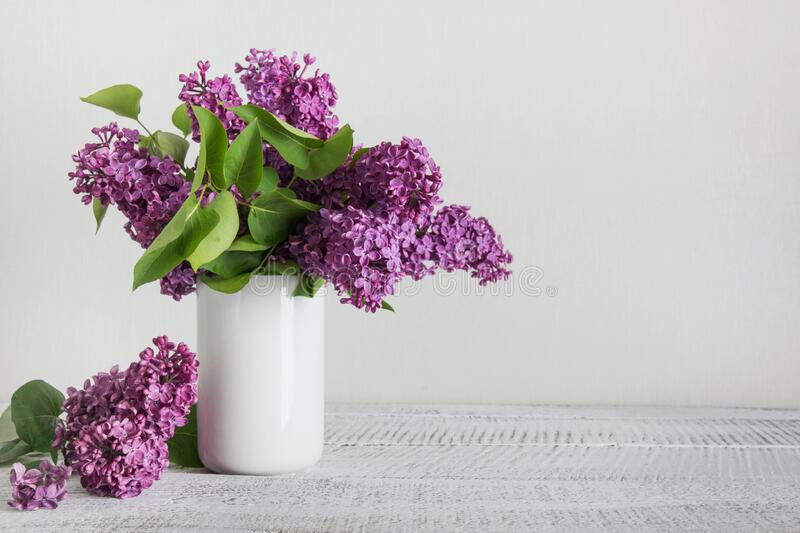 Purple lilac flowers in white vase. Space for text. Purple fresh lilac flowers in white vase. Vintage. Space for text. Womens day royalty free stock photography