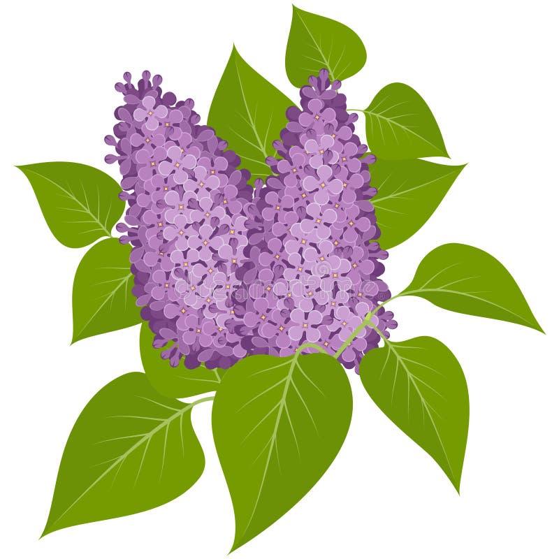 Purple lilacs stock illustration