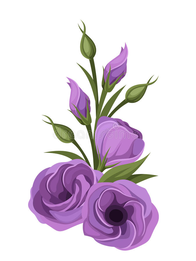 Purple lisianthus flowers stock vector illustration of bouquet illustration of purple lisianthus flowers isolated on a white background thecheapjerseys Choice Image