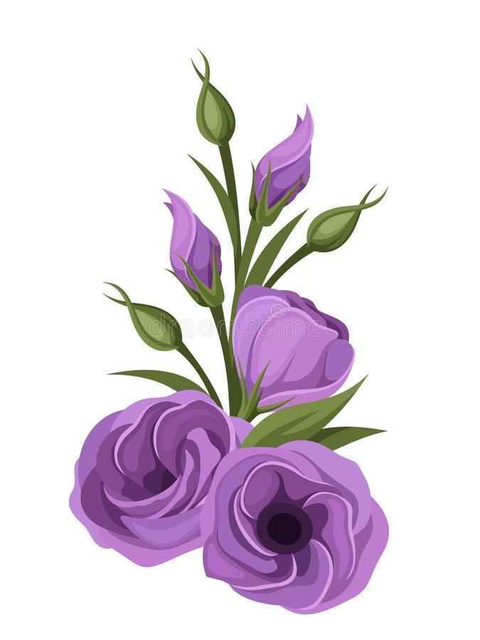 Purple lisianthus flowers stock vector illustration of bouquet download purple lisianthus flowers stock vector illustration of bouquet 36845348 altavistaventures Choice Image