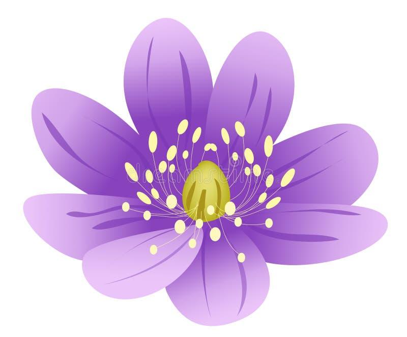 Purple lotus flower stock illustration