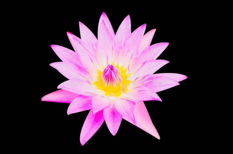 Download Purple Lotus Royalty Free Stock Image - Image: 32225926