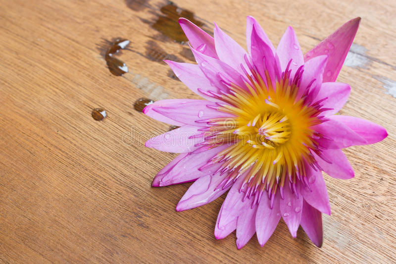 Purple lotus on wooden board. Purple lotus on wooden board with water drop stock images
