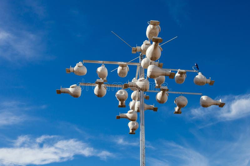 Purple martin Progne subis nests made by environmentalist in the Hill Country, Texas to help preserve the rare swallow species.  royalty free stock photos