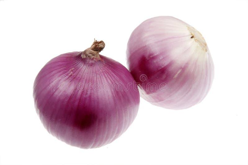 Purple onion royalty free stock photo